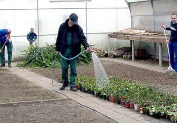 Floristischer und grüner Bereich (Modulare Qualifizierung)