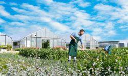 Ausbilder*in Garten- und Landschaftsbau und Gärtner*in in Oschersleben gesucht